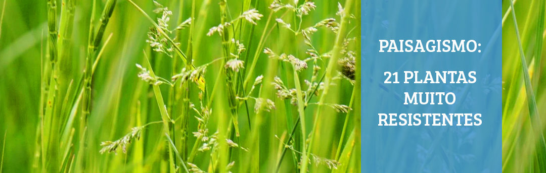 Paisagismo – 21 Plantas muito resistentes